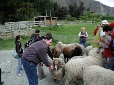 bill_feeding_the_friendly_sheep