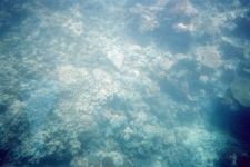 coral_from_the_submersible
