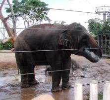 elephants_getting_a_shower
