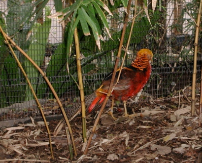 lovely_orange_and_red_bird