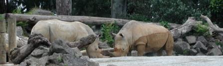 rhinos making nice