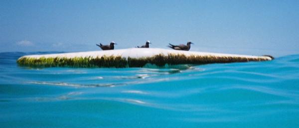 three_birds_at_sea
