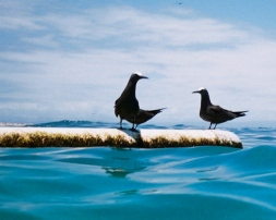 two_birds_at_sea