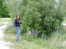 viv_on_glenorchy_walkabout_pretty_flowers