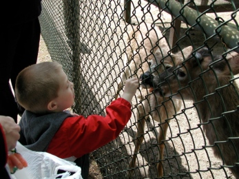 jake-feeding-the-deers.jpg